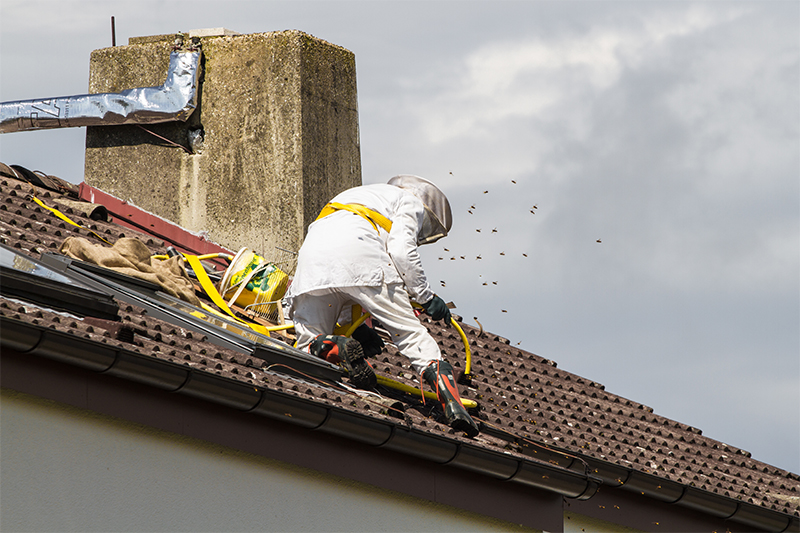 Bee Pest Control in Banbury Oxfordshire